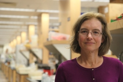 BWH's Elizabeth Henske studies LAM cells to one day improve treatments of the disease.