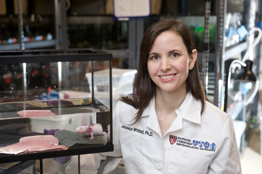 Jessica Whited, PhD
